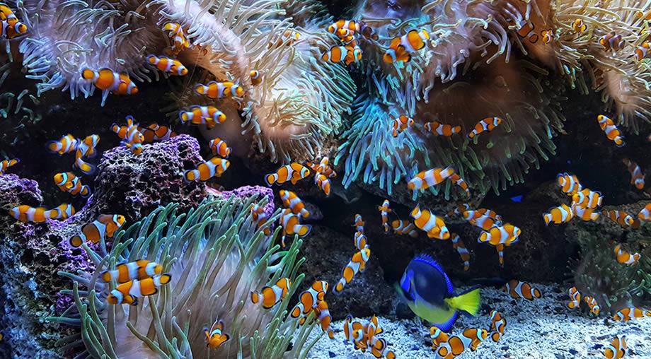 aquarium loro parque tenerife