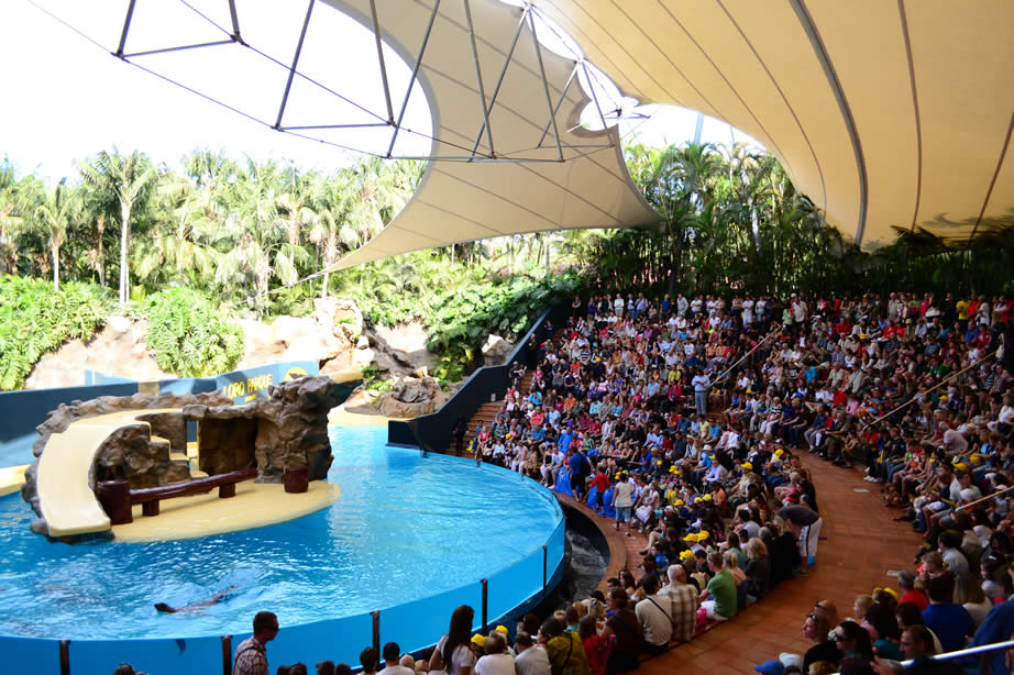Loro Parque Tenerife - All You Need To Know For Your Visit