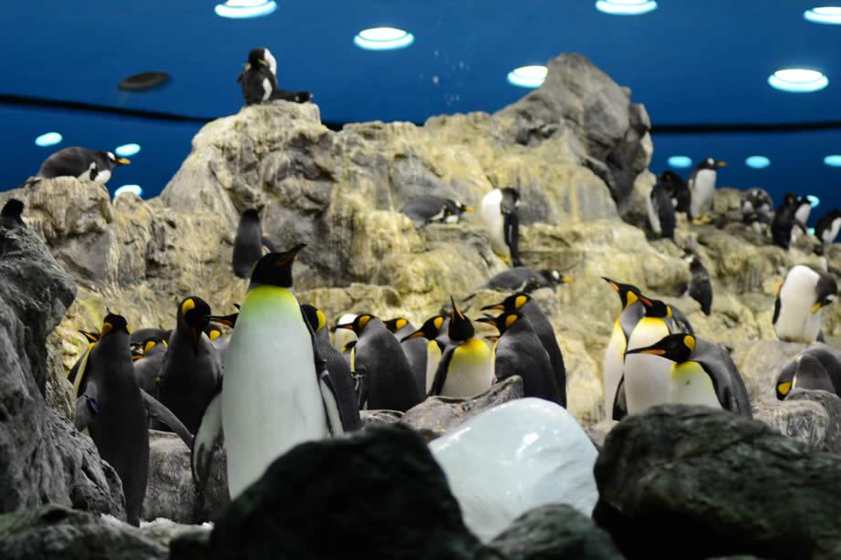 penguin-planet-loro-parque