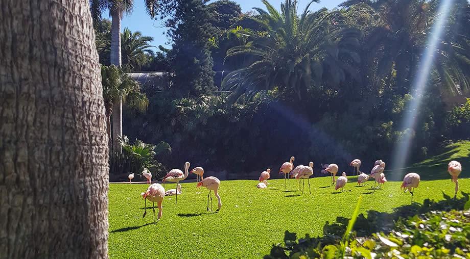 visit loro park tenerife