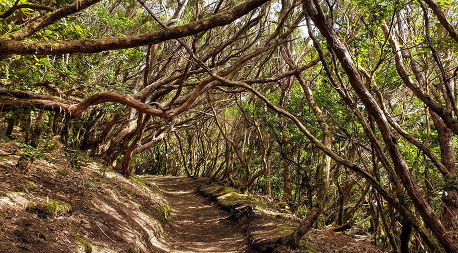 enchanted forest hike anaga tenerife