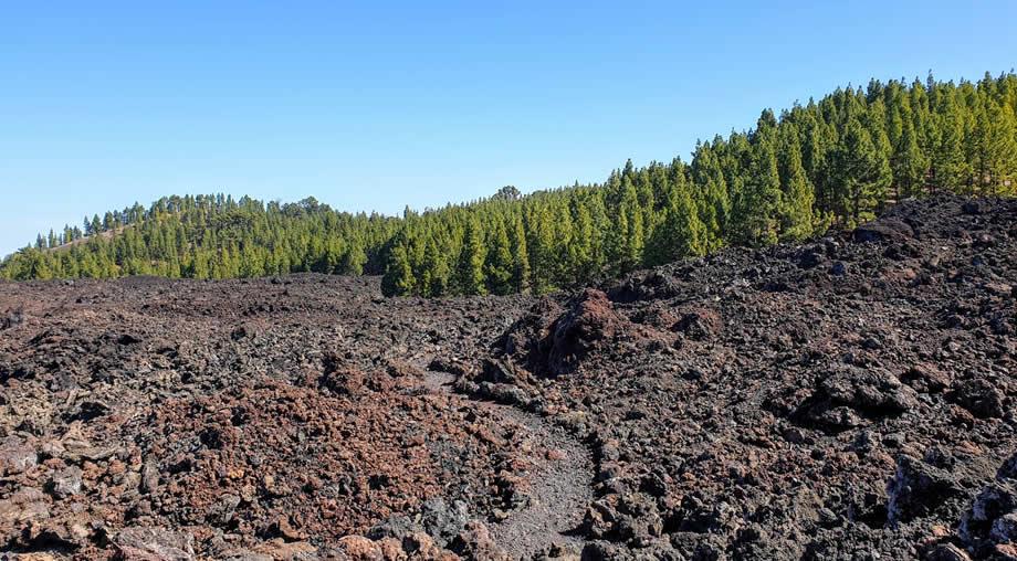 lava field tenerife chinyero loop