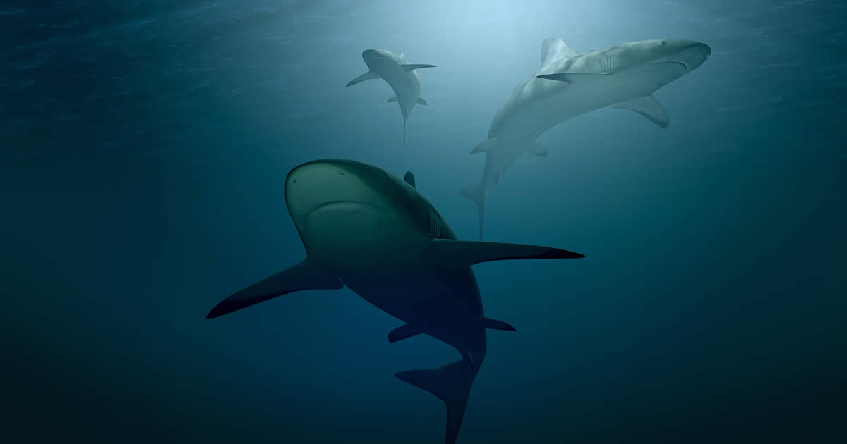 Are there sharks in Tenerife and the Canary Islands in general?