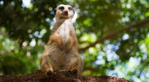 Oasis park fuerteventura zoo