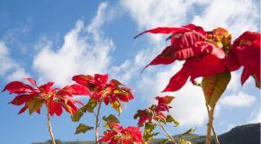 El hierro islas canarias flower