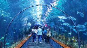 Shark tunnel loro parque tenerife