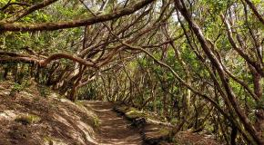 Enchanted forest hike ana tenerife