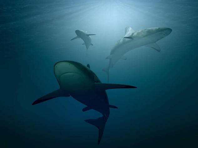 Sharks in tenerife